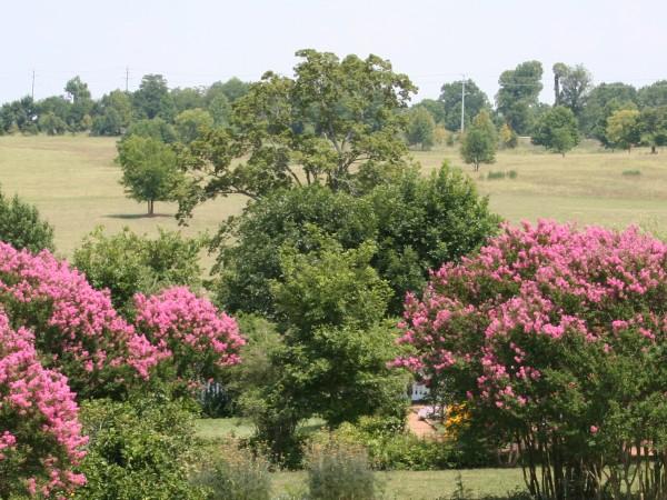 Rachel's Garden in full bloom