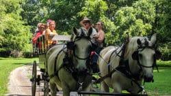 Wagon tour horses and family