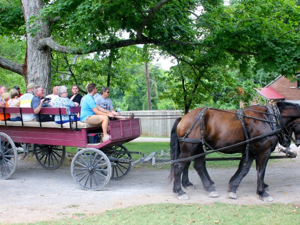 summers at the hermitage carriage horses